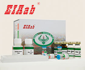 Chicken YWHAZ ELISA Kit